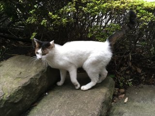 Garden cats of Hotel New Otani